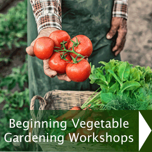 Beginning Vegetable Gardening Workshops