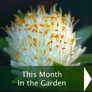 This month in the garden